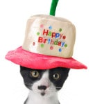 Domestic Cat Birthday