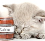 Catnip and a cat
