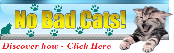 No bad cats - Click here