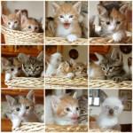 Cat Names