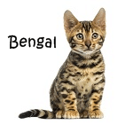 Bengal Click Here