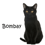 Bombay Cat Click Here