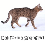 More on California Spangled