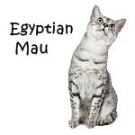Egyptian Mau Cat breeds