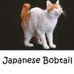 Japanese Bobtail read more