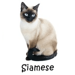 Siamese Cat Read More