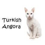 Turkish Angora Cat Click here
